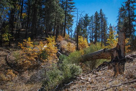 Condor Country – Los Padres Nat'l Forest – California Fall